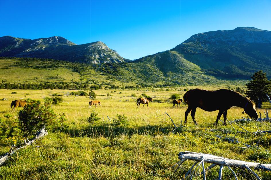 croatia-nature-secret-adriatic.jpg