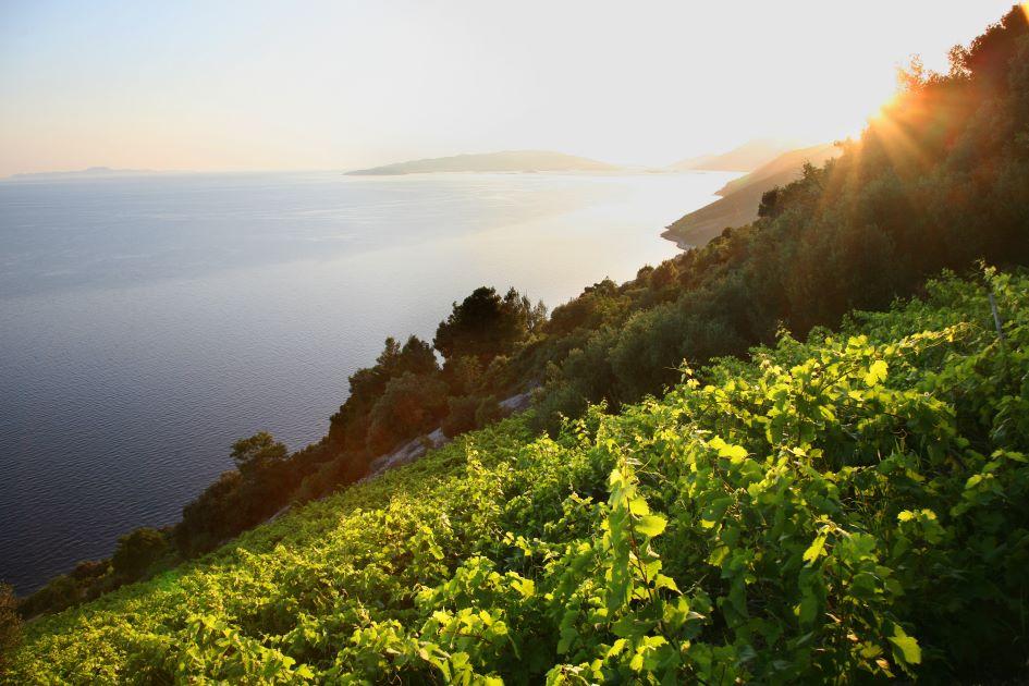 dingac-vineyards-peljesac-peninsula-croatia.jpg