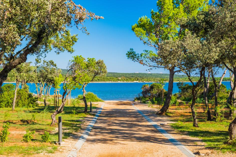 losinj-path-pine-trees-secret-adriatic.jpg