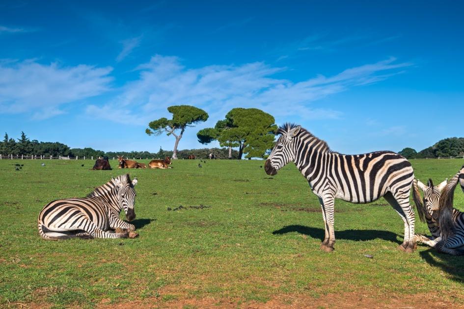 north-adriatic-brijuni-national-park-fauna-secret-adriatic.jpg