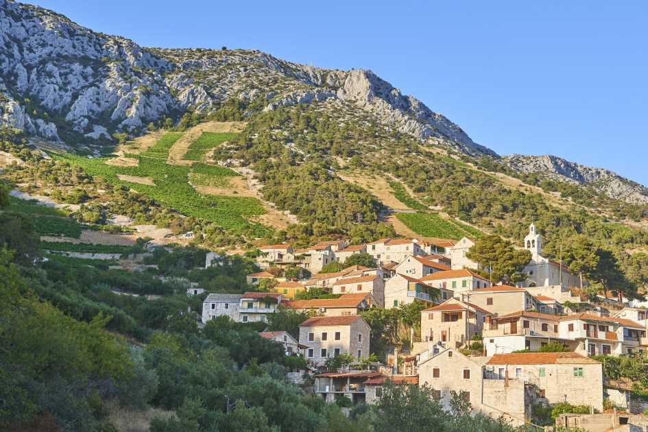 sveta-nedjelja-vineyards-hvar-island-dalmatia-croatia.jpg